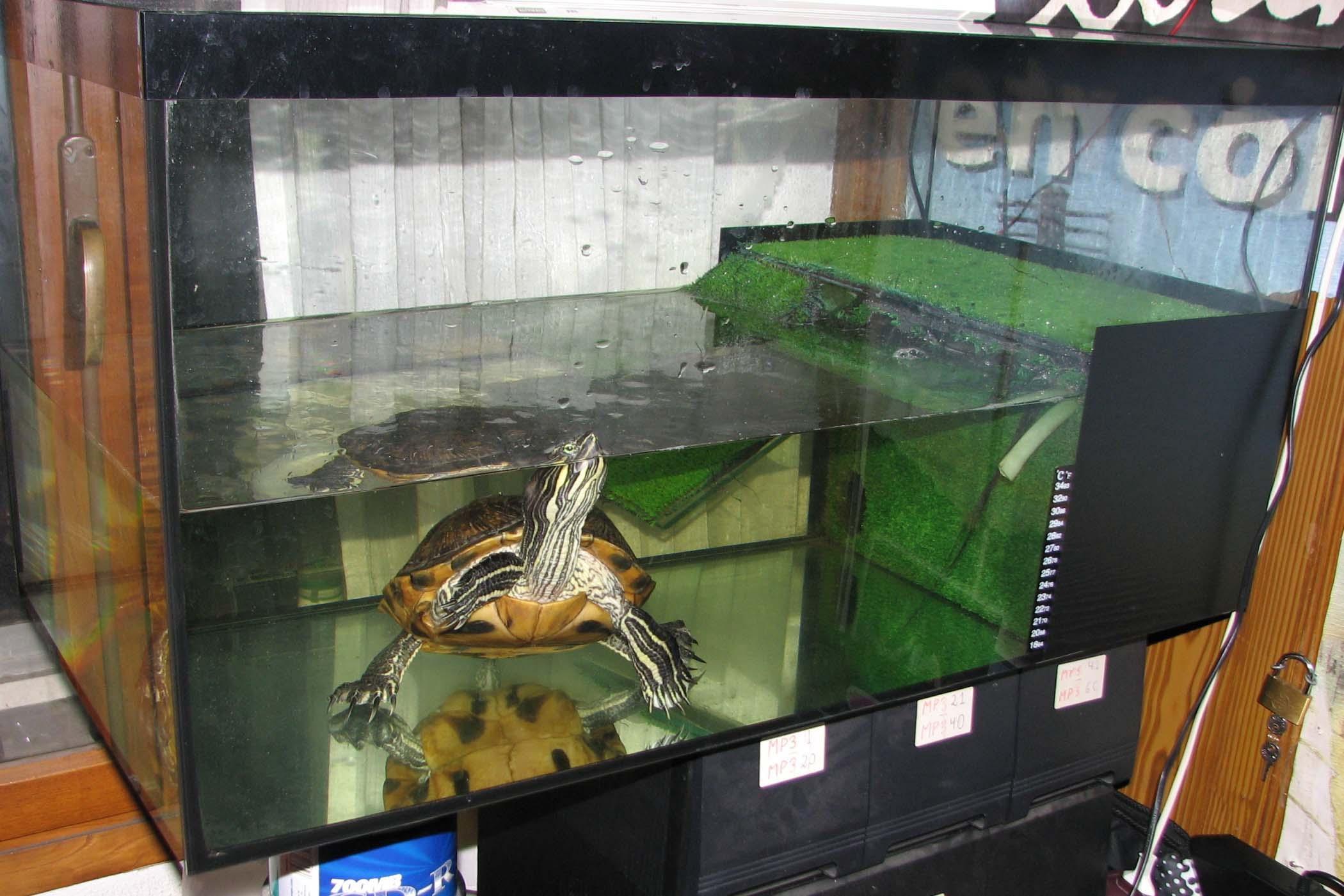 Una tortuga en casa el acuario o tortuguera for Peceras para tortugas
